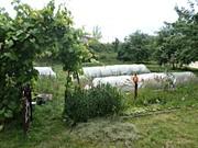Продаётся дом в Беларуси,  Гродненская область,  г.Волковыск